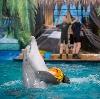 Дельфинарии, океанариумы в Троицке